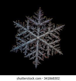 Real snowflake macro photo: very large fernlike dendrite crystal, isolated on black background