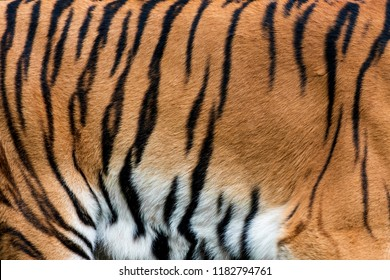 Real tiger skin fur texture for background