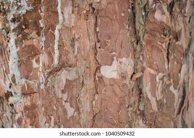 Real tree old wooden texture. Wood background with brown green structure. Natural forest rustic photo. Ecological pine bark.