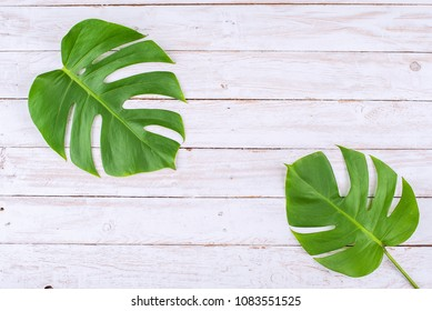 Real tropical monstera leaves on white wood flat lay design