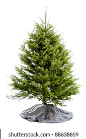 Real undecorated Christmas tree isolated on a white background