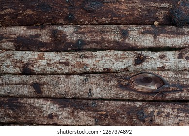 Real vintage wood background with bark and nails