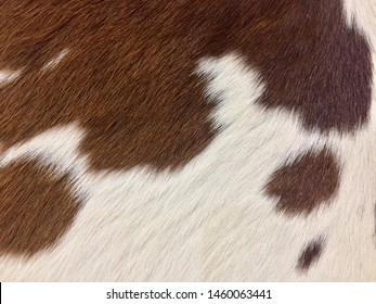 Real white and brown cowhide. Close up cow fur texture. Animal real fur background, with detail of wool hair texture. Pattern of cow hide. Beautiful leather texture style. Real skin and hair of a cow.