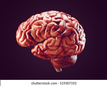 Real brain images stock photos vectors shutterstock realistic 3d illustration of human brain with blood vessels isolated on black ccuart Choice Image