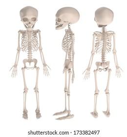 realistic 3d render of fetus skeleton