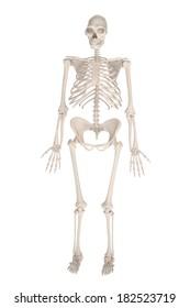 realistic 3d render of homo erectus