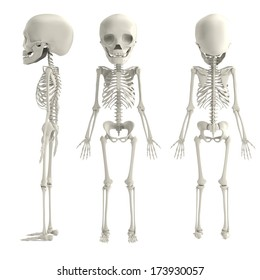 realistic 3d render of young skeleton