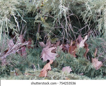 Realistic camouflage seamless pattern. Fall leaves on the bush. Ideal for hunting and military purposes.