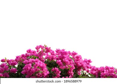 Realistic flowering plants foreground  isolated on white background with clipping path