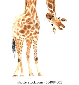 Realistic giraffe made in watercolor. Close-up. Hand drawn illustration