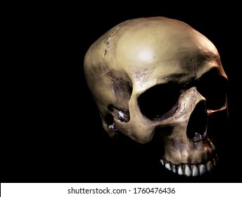A realistic human prop skull with a missing lower jawbone photographed on a dark background. The skull is facing right, and it is positioned in the right part of the image.