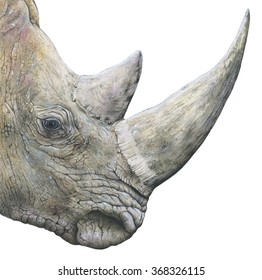 realistic illustration of a head of rhino ( Ceratotherium simum) with a big horn