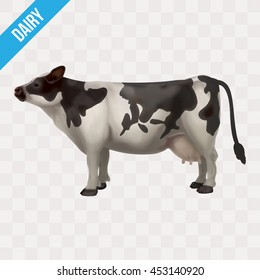 realistic Isolated cow
