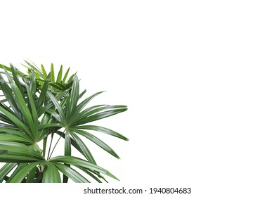 Realistic lady palm foreground isolated on white background