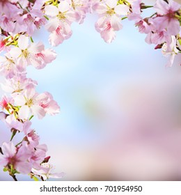 The realistic sakura cherry branch with blooming flowers with nice background color