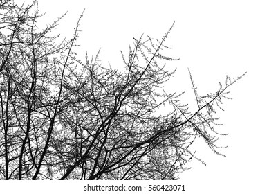Realistic silhouette of bush with bare branches (illustration).