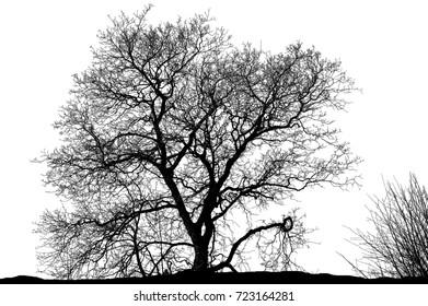 Realistic tree silhouette