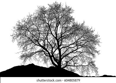 Realistic tree silhouette (illustration).
