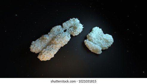 realistic X chromosome 3D Illustration