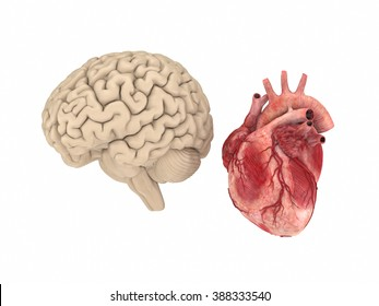 Realistichuman brain and heart isolated on white background.