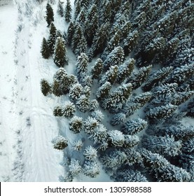 Really amazing and beautiful resort Shovi in winter. Fantastic nature with snowy trees. This is Racha gorgeous and white region of Georgia.