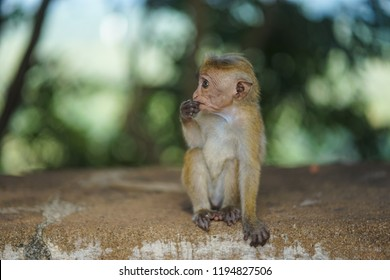 really cute baby monkey sucking his fingers with a bokeh background