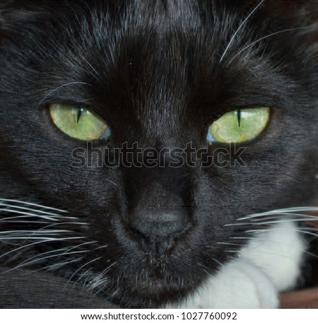Really Cute Black Kitten Black Cat Stock Photo Edit Now 1027760092