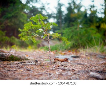 Really fresh sprout growing in the forest