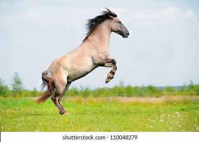rear free horse in the field