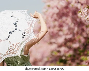 Rear view of Asian woman wearing green lolita dress and holding white lace umbrella in cherry blossom park in spring.