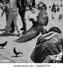 Rear view of a boy being harassed by a pigeon