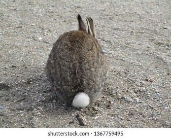 Rear view of a brown-grey bunny rabbit with its white tail, 2019