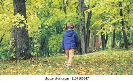 Rear view of curly-haired boy 8 years old walking alone in the autumn Park. Yellow leaves on the ground and trees