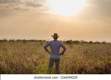 Rear view of farmer with straw hat holding arms on hips in soybean field in harvest time