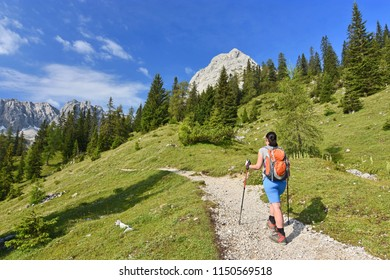 Rear view of a female hiker walking on a trail in the Alps near Ehrwald, Tyrol, Austria. Landscape with grass, trees, rocky mountains and blue sky.
