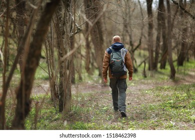 Rear view of hiker. A red-haired man in a brown-and-blue windbreaker with backpack and rope walks in spring forest. There are no foliage on trees. Blooming primrose flowers are visible on the ground.