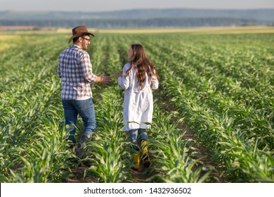 Rear view od farmer with hat and woman agronomist in white coat walking in corn field