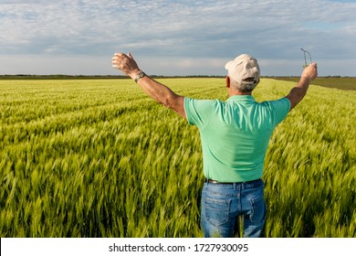 Rear view of senior farmer standing in in wheat field with his arms outstretched.