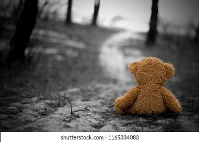 Rear view of Teddy sitting on the ground and looking at the evening light. Lonely teddy sitting alone at woodland in black and white. Black and white picture of a teddy bear sitting  in a forest alone