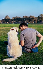 Rear view of a white female mixed Labrador dog sitting with her trainer/owner on the grass of an urban park on a sunny afternoon.
