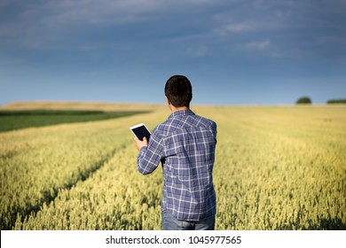 Rear view of young handsome agriculture engineer standing in green wheat field with tablet in hands in early summer