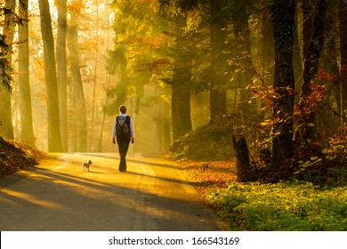 Rear view of young woman walking with dog on road through colorful autumn forest.
