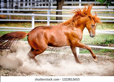 A rearing horse.