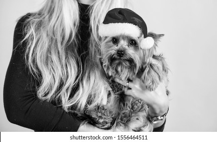 Reason love christmas with pets. Ways to have merry christmas with pets. Girl attractive blonde hold dog pet pink background. Woman and yorkshire terrier wear santa hat. Celebrate christmas with pets.