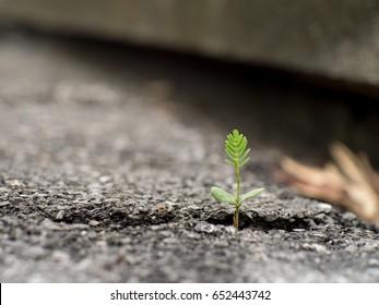 Reborn of Tree