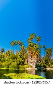 Recent efforts to restore and rehabilitate the Echo Park Lake have transformed the area into one of most enjoyable destinations in the entire city.  Key features include,  fishing, boating, picnicking