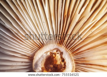 Recording Lamellae Fungus Mushroom Base Macro Stock Photo (Edit Now ...