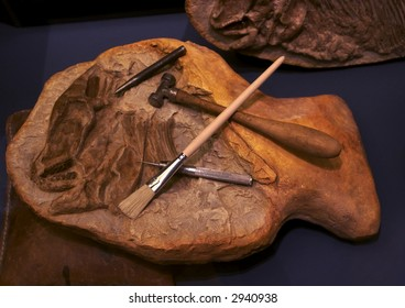 Recovering a fossil specimen