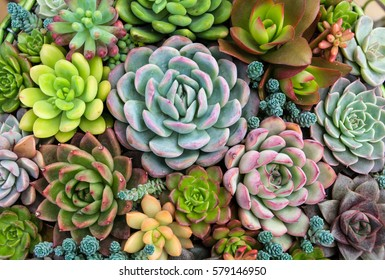 Succulent Images Stock Photos Vectors Shutterstock