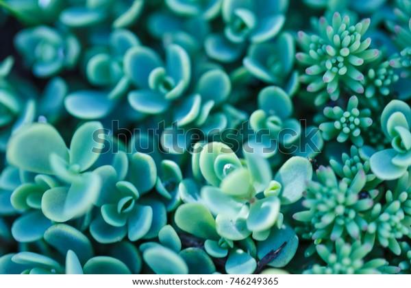 The rectangular arrangement of succulents. Cactus succulents in a planter